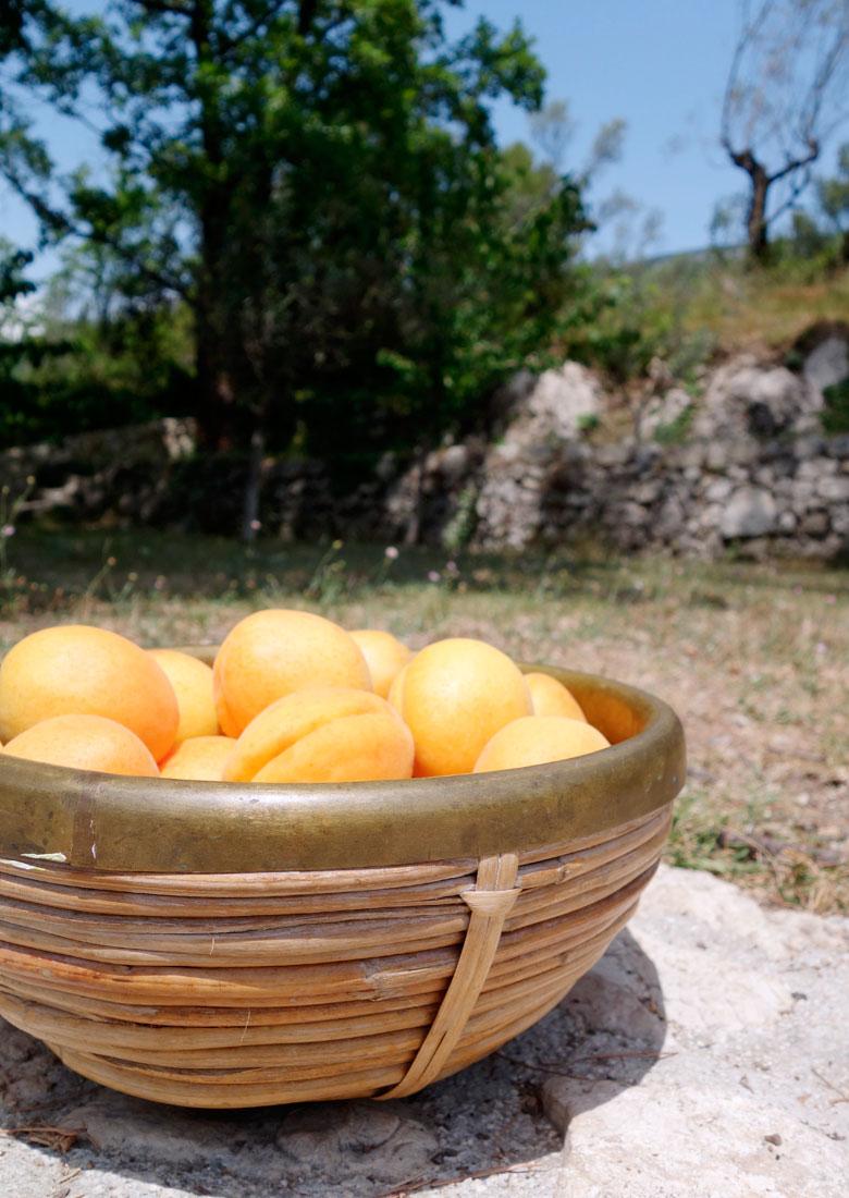 Apricot marmelade