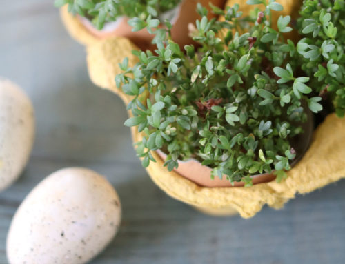Cress For Easter